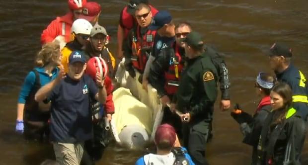 Beluga Rescue, New Brunswick