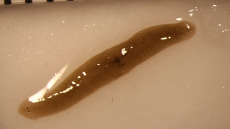 2headedworm