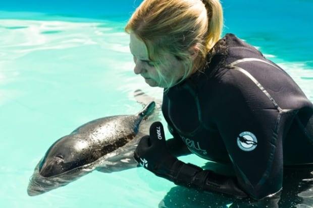 Harbour porpoise Daisy dies at Vancouver Aquarium
