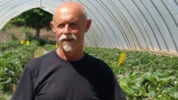 "Jackson Lore calls the strawberry crops he's seeing this season ""unbelievable."""