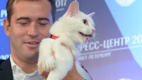 russian-cat-160617