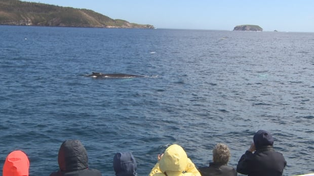 Whale watching off Bay Bulls