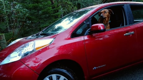 Salt Spring Island lays claim to unofficial title of 'electric car capital of Canada'