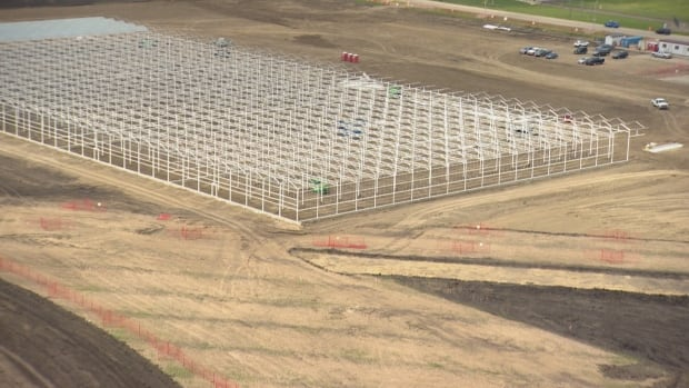 An aerial view shows a portion of the 800,000-square-foot site of the Aurora Sky medical marijuana facility.