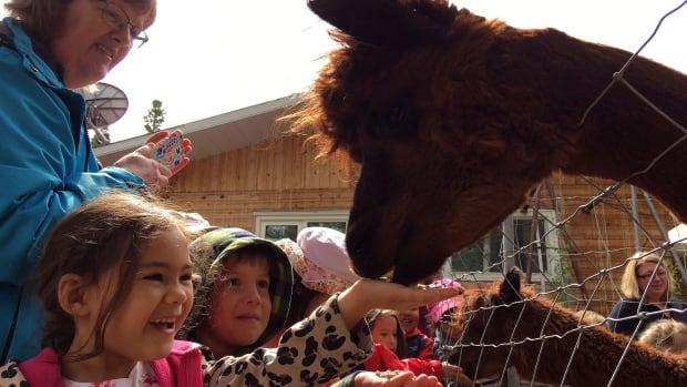 Kindergarten students feed alpacas as part of the Kids on the Farm program, teaching children about sustainable farming.