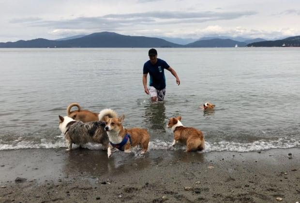 Dog Friendly Beach Richmond Ca