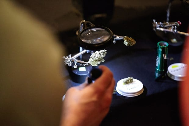 Marijuana Sommelier 20170618