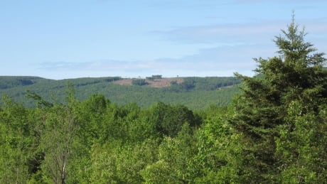 Wentworth Valley clear-cut