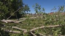 Red Deer wind damage