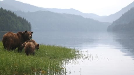 New study maps out salmon hotspots across B.C. for bears