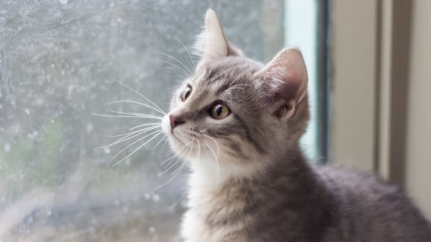 Spca Cat Adoption Edmonton