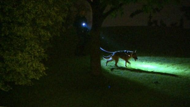 toronto police dog