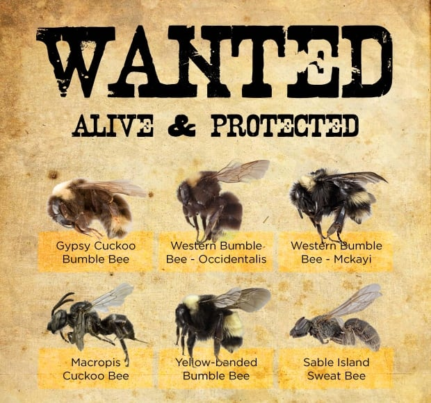 Friends of the Earth bees wanted poster