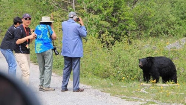 Visitors to Banff National Park approach a black bear to take photos in this photo that has been circulating on a local social media group.