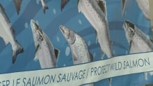 Salmon poster