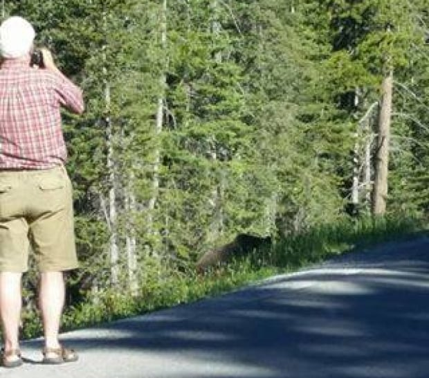 Lake Louise Grizzly tourist