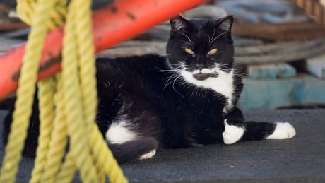 The feuding, feral cats of HMC Dockyard — and the ex-sailor who nurtures them