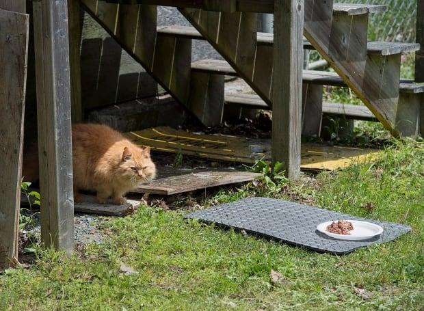 Dockyard Cats 20170628