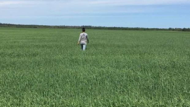 Kim Keller checks her crops near Gronlid, Sask.