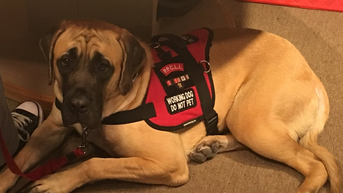 Service Dogs Canada: Online Identification for Service Dogs