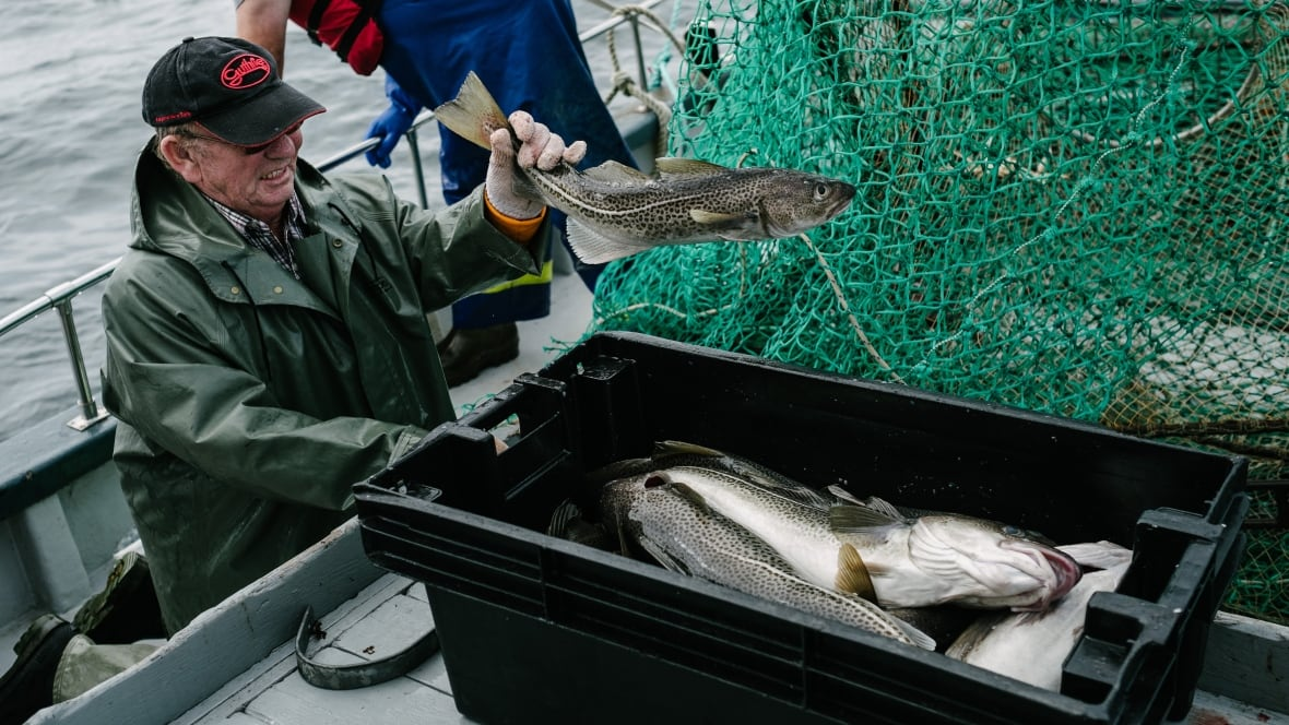 More than just a trendy label: The uphill struggle to make the cod fishery sustainable