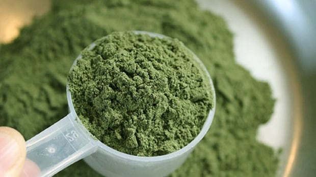 Kratom, a coffee-like plant native to southeast Asia, is readily available in Canada.