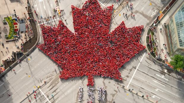 The living maple leaf, as seen from above.
