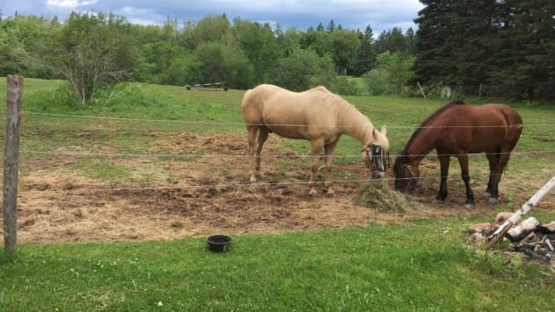 Salisbury village council voted against rezoning a property to allow two horses, Misty and Reiner, to stay with the Dangremond family.