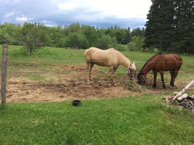 Salisbury horses