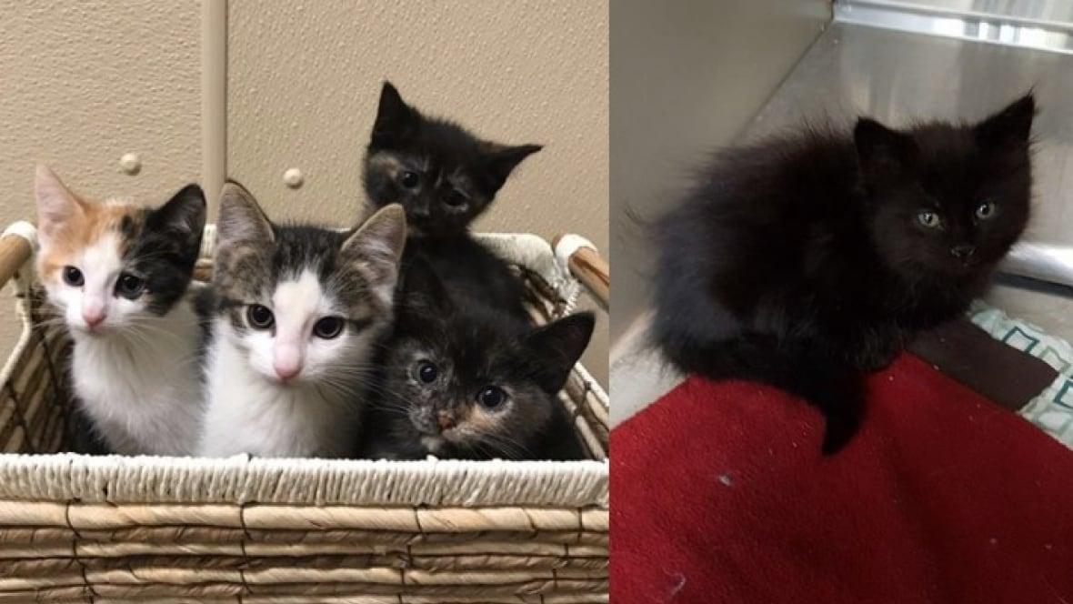 Spca Edmonton Cats For Adoption
