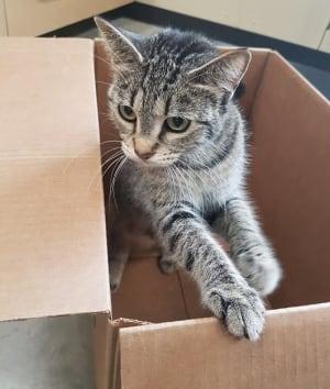 Cindy cat Prince Albert SPCA