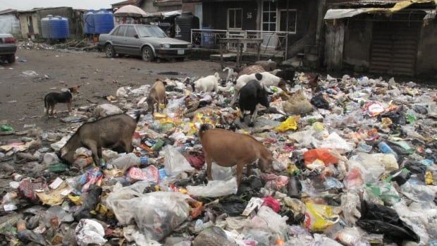 Animals scavenge on mounds of garbage in Oworonshoki, a slum on the edge of Lagos, Nigeria. Oluwaseun Femi Ijitola, 34, risked his life to escape this place to try to make a better life for his wife and five-year-old daughter.