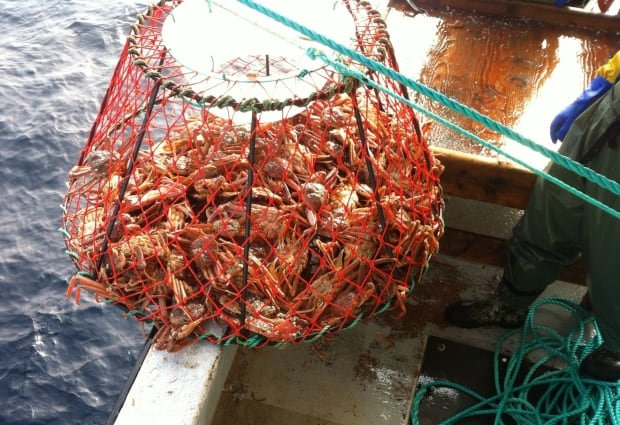 Crab on the Burin Tradition