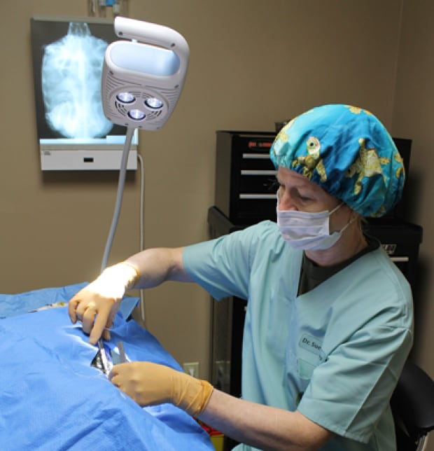 turtle surgery