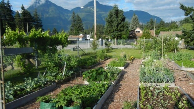A community garden programs is one of several new healthy lifestyle initiatives that has launched recently in Hope.