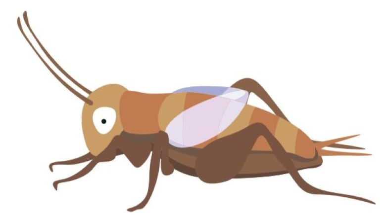 Theres A Cricket Emoji Coming To Your Phone Thanks In Part To