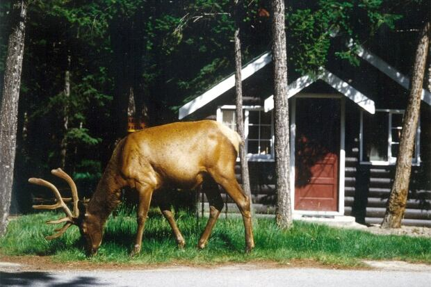 Elk_cabin
