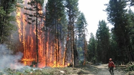 B.C. WILDFIRES 2017 CARIBOO FIRE CENTRE FIREFIGHTERS
