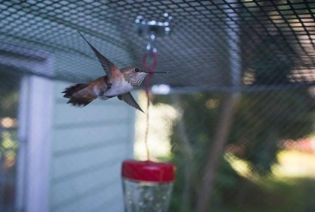 Hummingbird Pesticides 20170709