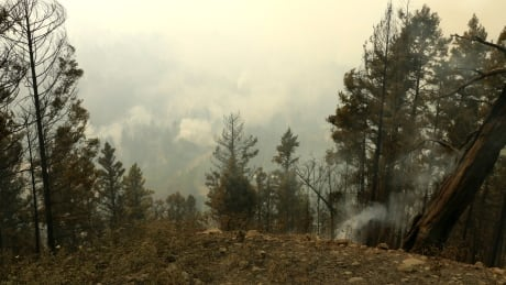B.C. wildfires burned large areas affected by mountain pine beetles, experts say