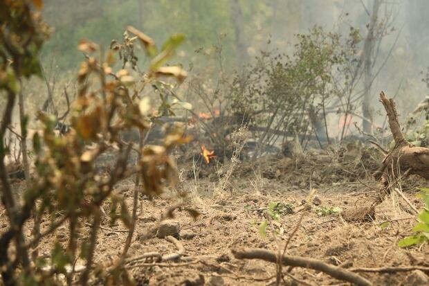 Princeton fire