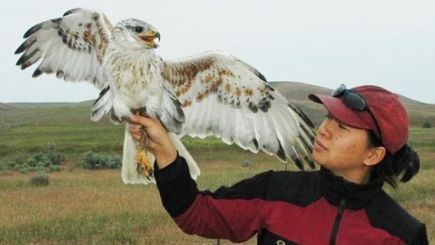 Researcher Janet Ng with a full grown ferruginous hawk.