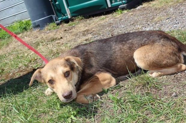 Kitchener Spca Dogs For Adoption