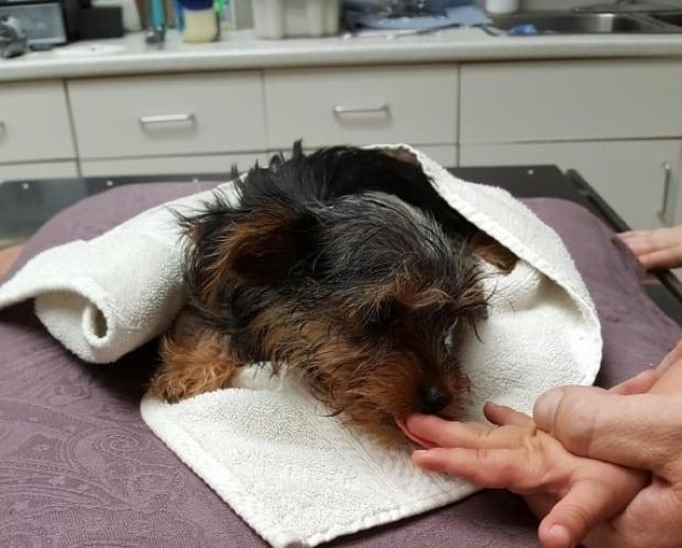 Found puppy 2