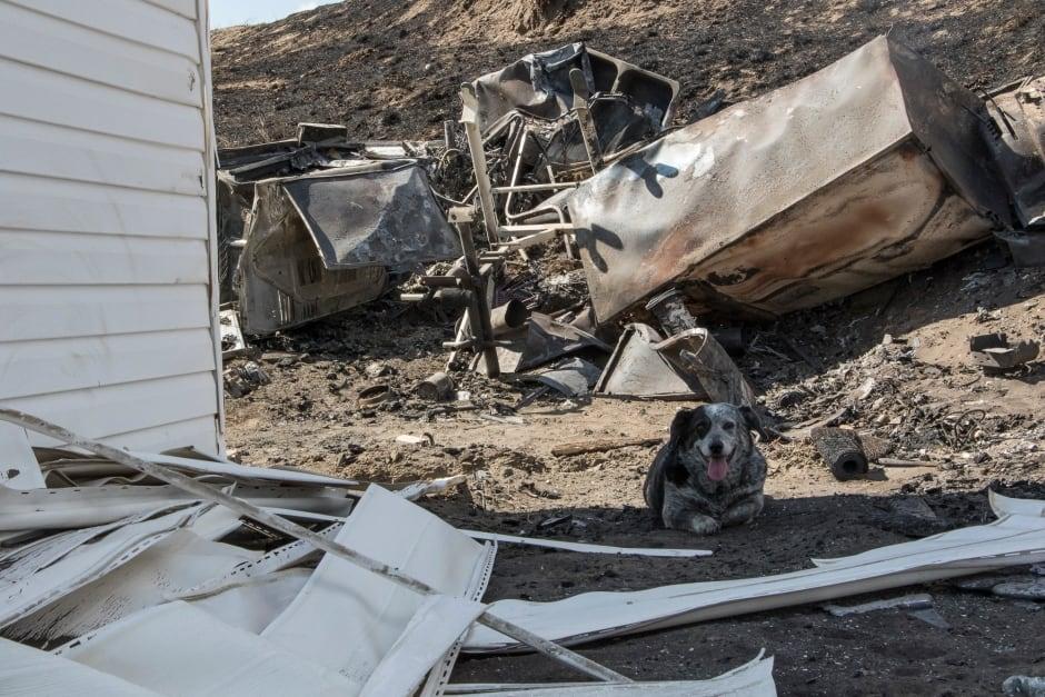 Aschroft Wildfire Dog Gary Classen