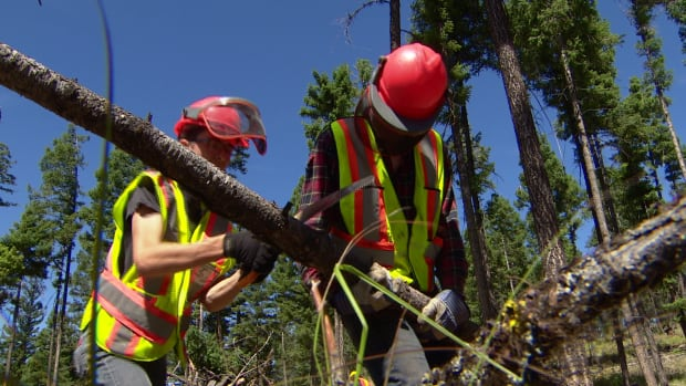 Mitigating disaster: teens spending summer in forest preventing wildfires