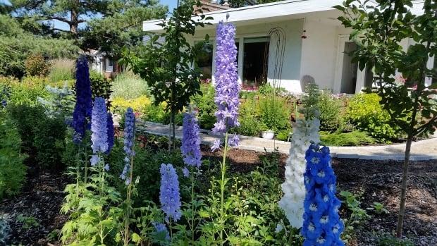 Maitland McNeil's garden