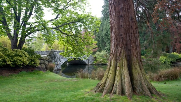 Beacon Hill Park in Victoria, B.C. is one of the municipality's 137 parks and open spaces.
