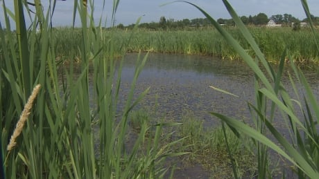 Some of Charlottetown's ponds in poor health, study finds thumbnail