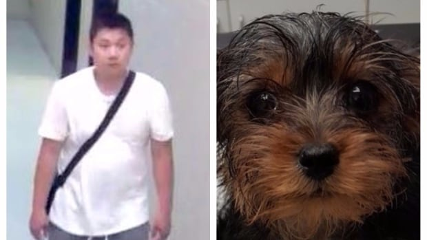Toronto Police have released a photo of the man, left, that they believe threw out a puppy wrapped in garbage bags, right.